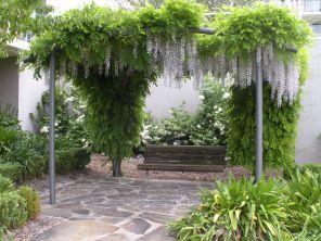 Wisteria canopy - Spring 2011