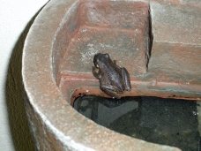 Another resident frog